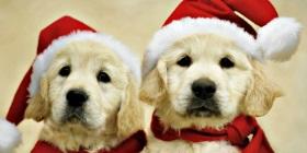 dogs-in-santa-hats-connaissance-spirituelle-net