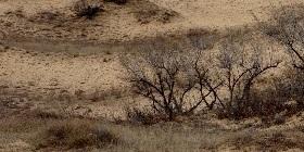 desert2-280
