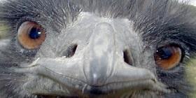 emu-2