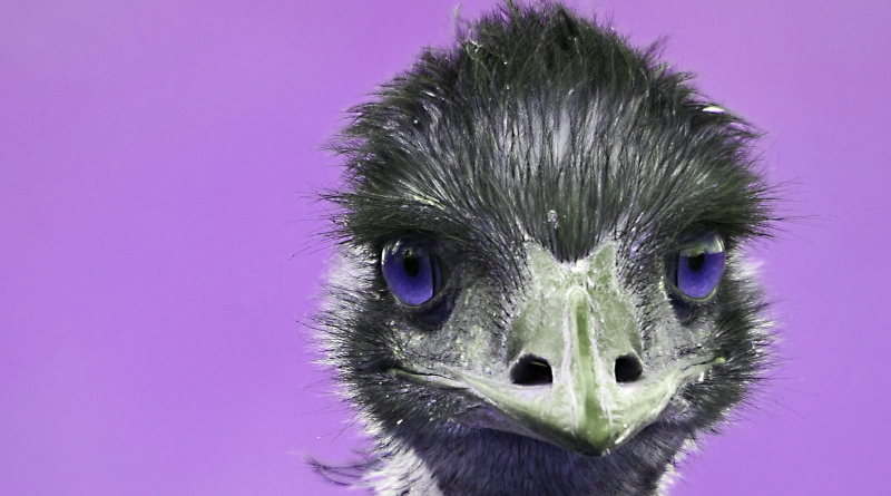 Soaring with Eagles, Walking with Emu